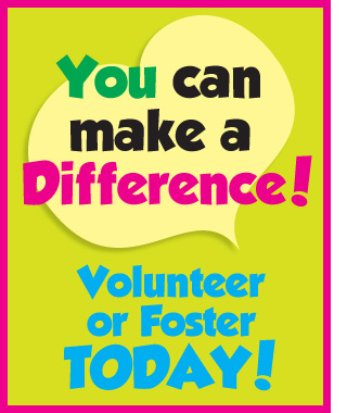 Foster or Volunteer Today!