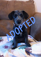 Mavis is Adopted