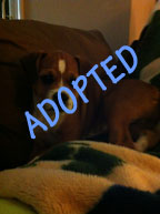 Peanut is Adopted
