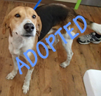 Roadie is Adopted
