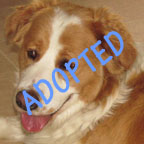 Ruby is Adopted